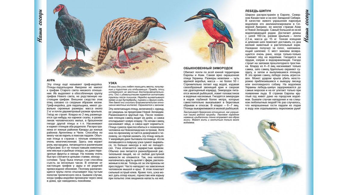 Энциклопедия животных Наши соседи. Интересный мир