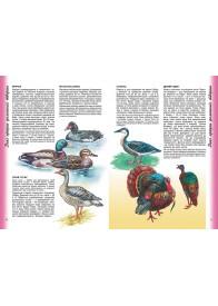 Енциклопедія тварин. Наші сусіди