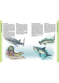 Енциклопедія тварин. Дика природа