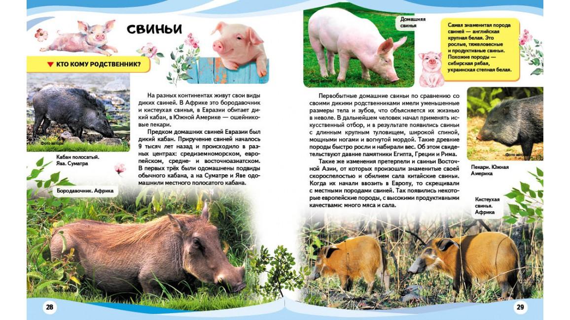 Домашние животные и их дикие родственники. Энциклопедия в вопросах и ответах