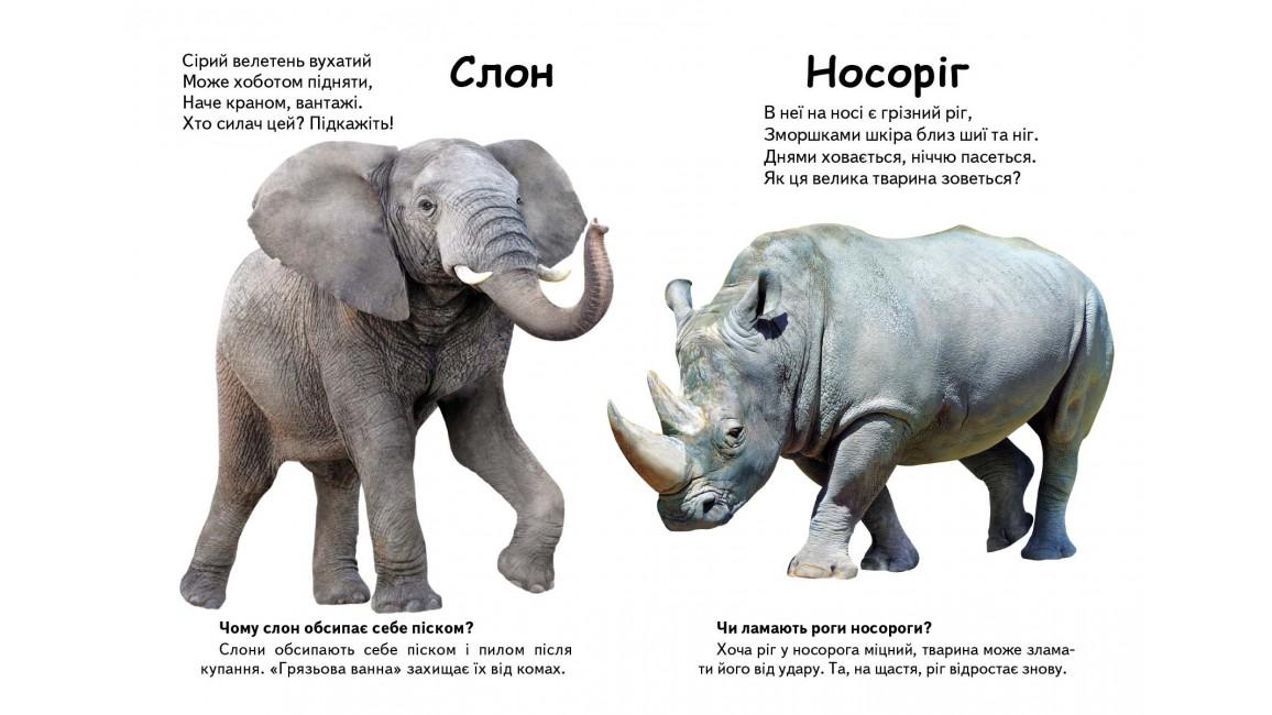 Хто це? Екзотичні тварини. Запитання та відповіді.