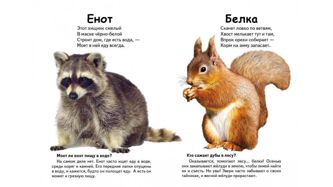 Кто это? Лесные животные. Вопросы и ответы