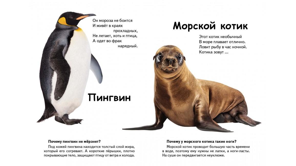 Кто это? Морские животные. Вопросы и ответы