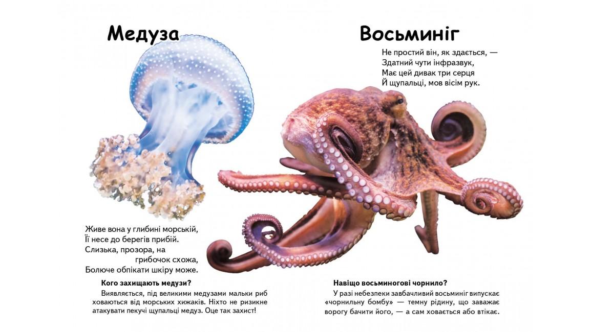 Хто це? Морські тварини. Запитання та відповіді