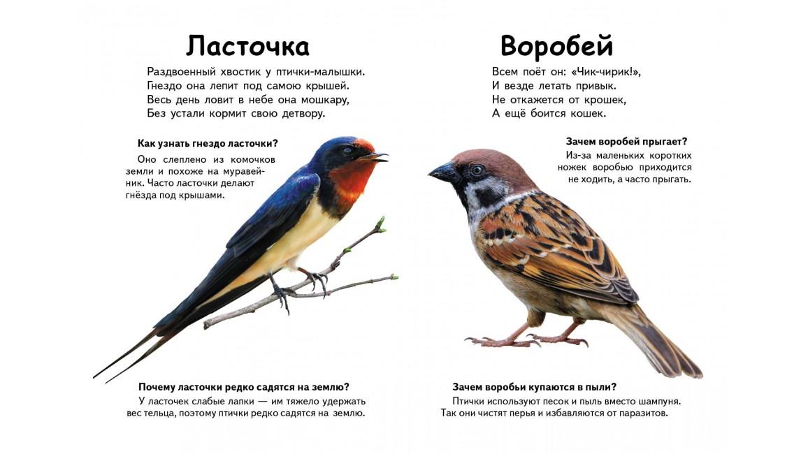 Кто это? Птицы. Вопросы и ответы