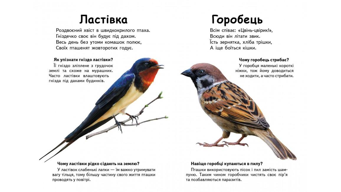 Хто це? Птахи. Запитання та відповіді