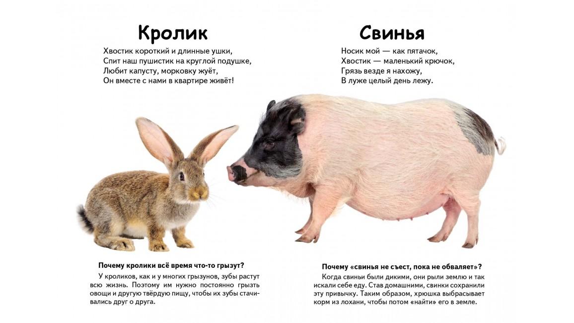 Кто это? Домашние животные. Вопросы и ответы