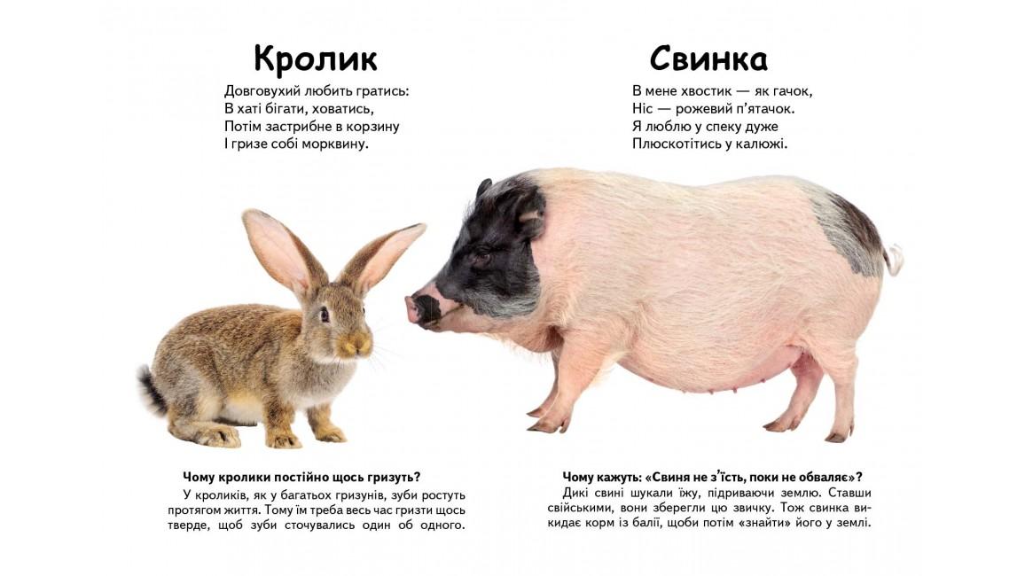 Хто це? Свійські тварини. Запитання та відповіді
