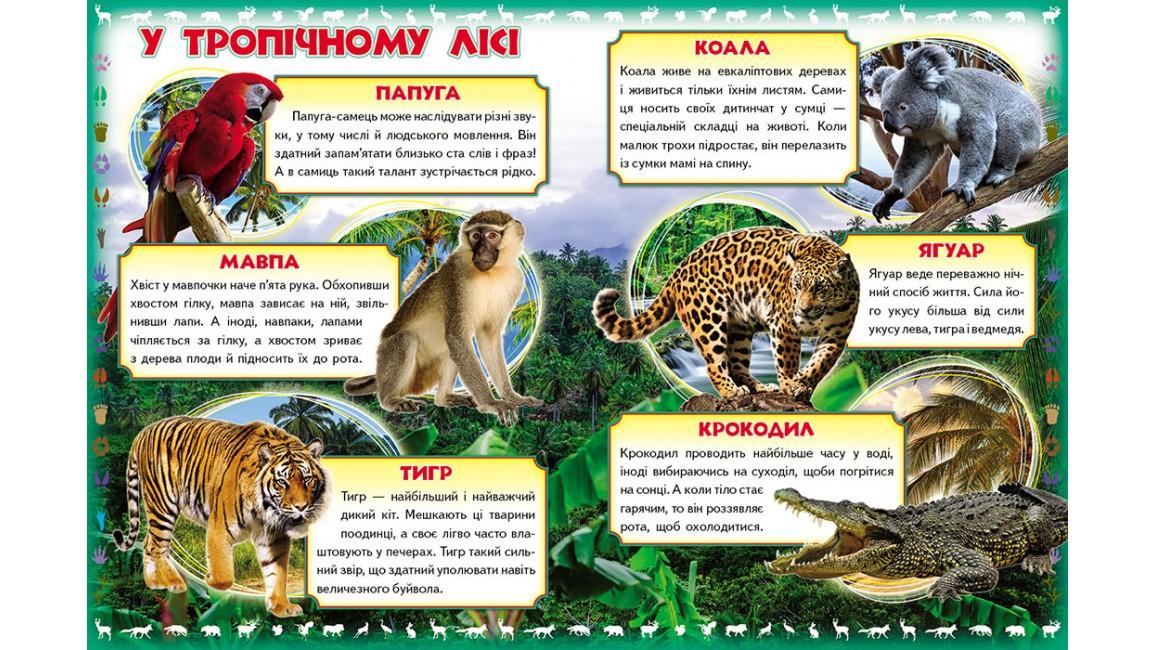 Моя перша книга. Про диких тварин