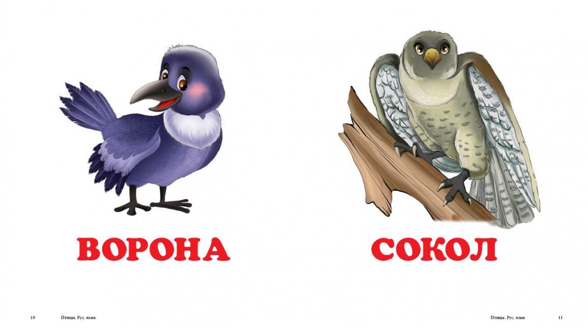 Птицы. Книжка-малышка