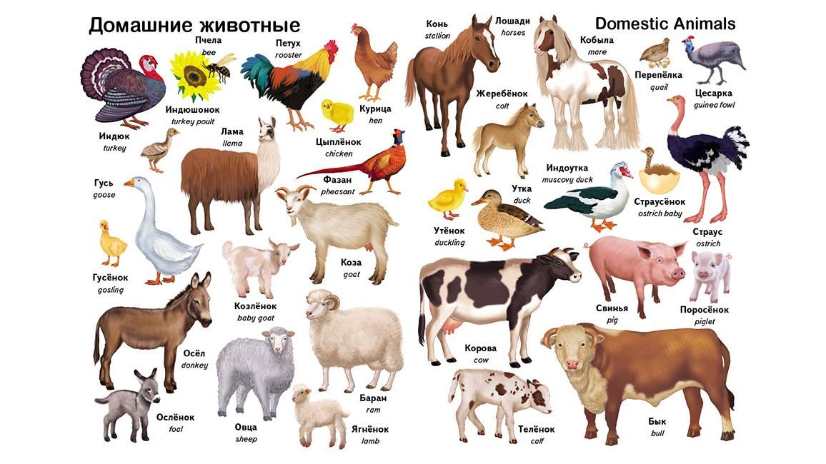 Первые слова. Животные. + английский