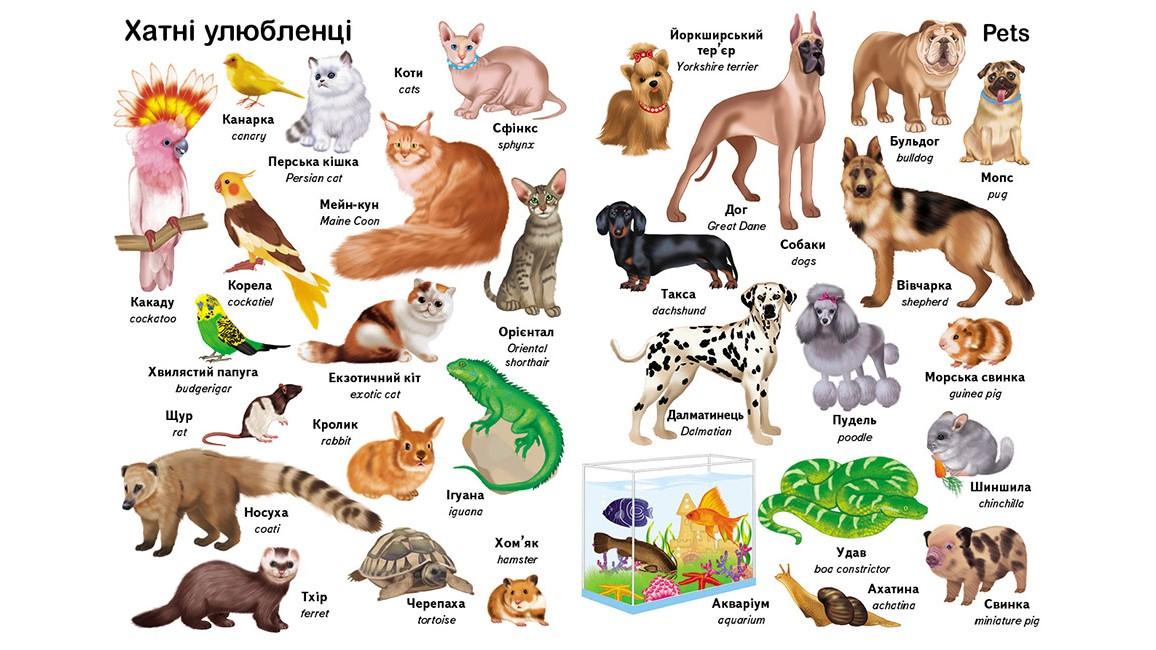 Перші слова. Тварини. + англійська