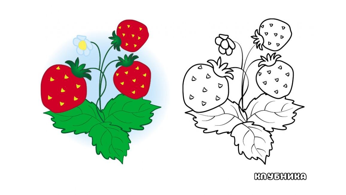 Фрукты и ягоды. Посмотри и раскрась