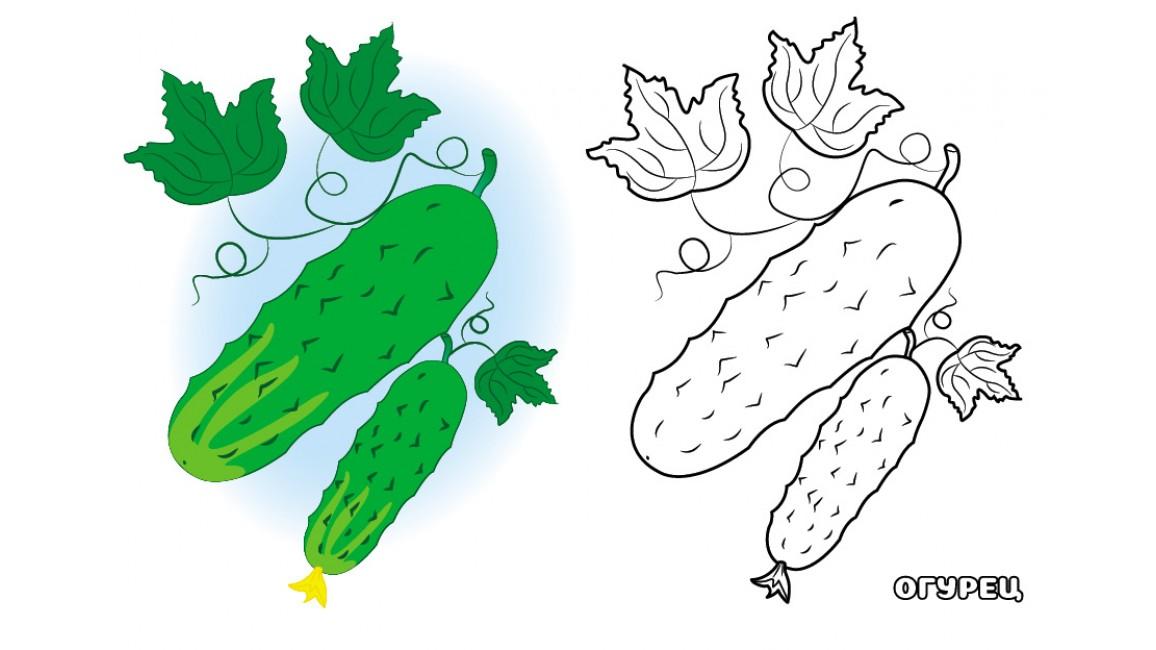 Овощи. Посмотри и раскрась