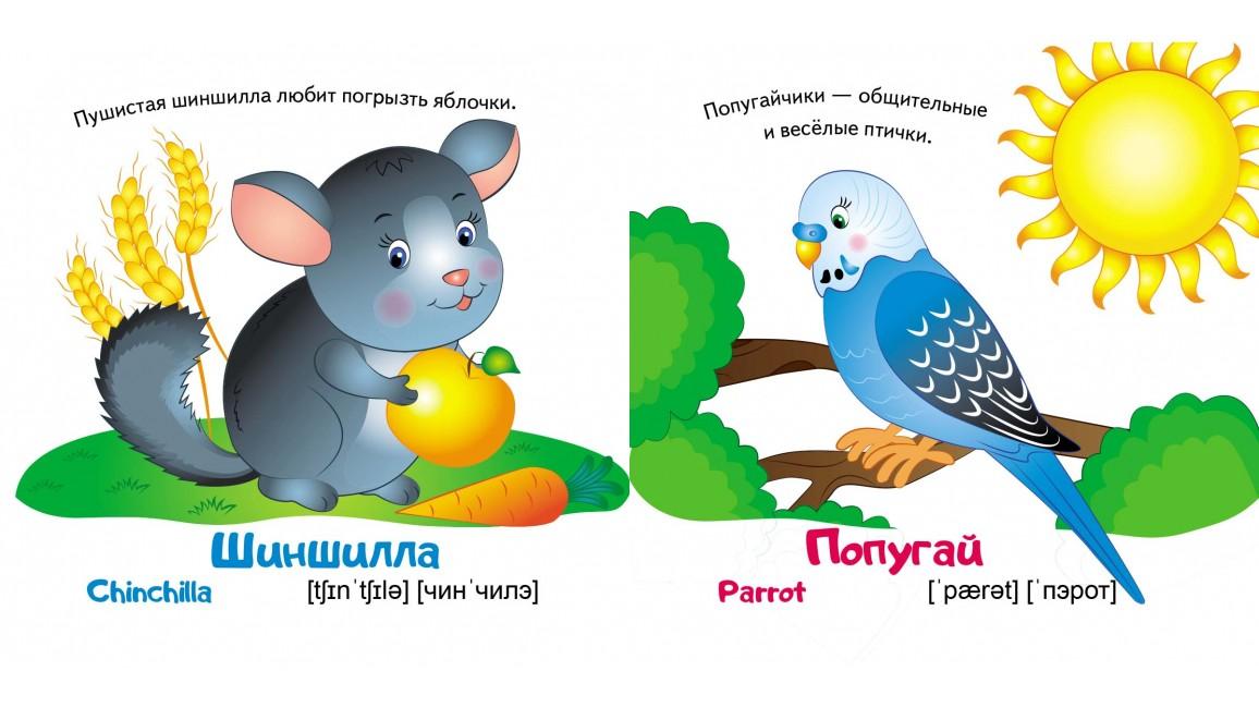 Любимые животные. Мир в картинках